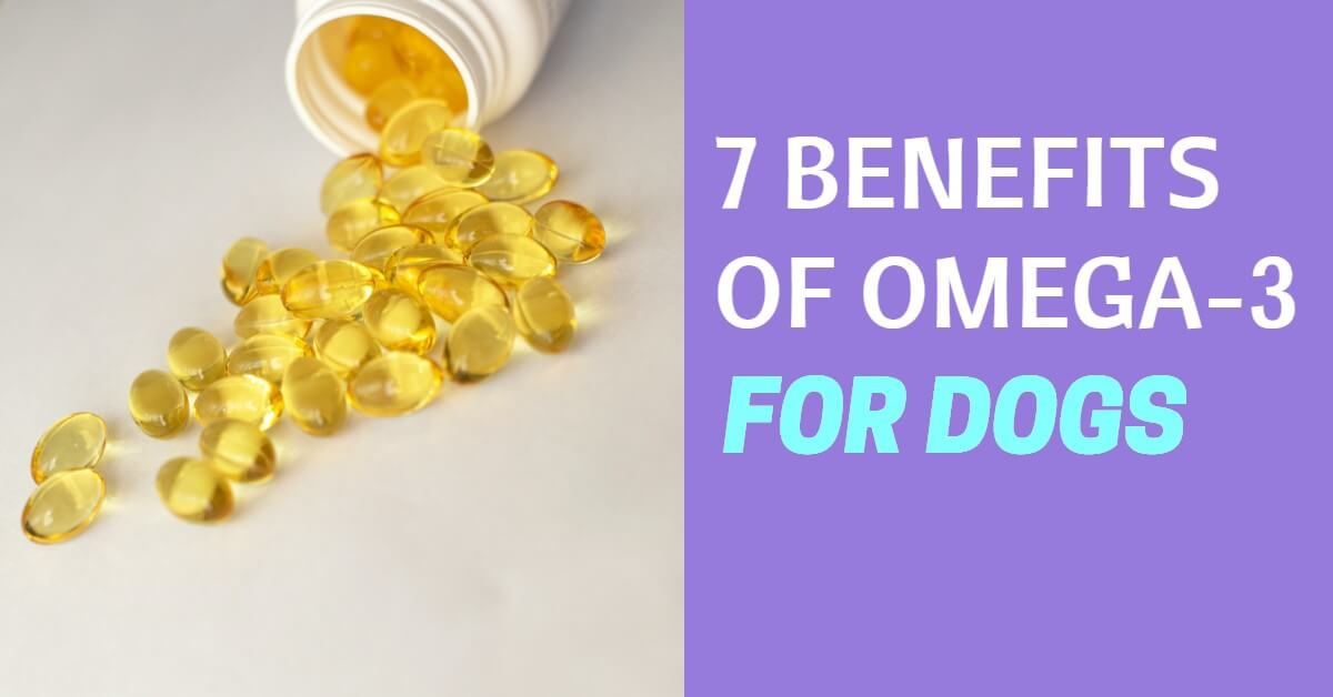 benefits of omega 3 for dogs