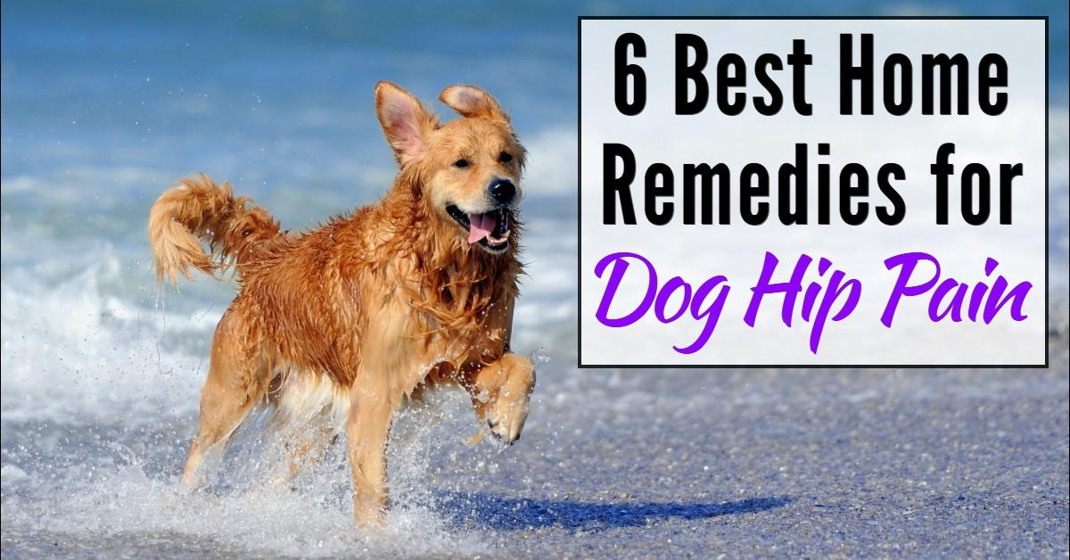 home remedies for dog hip pain