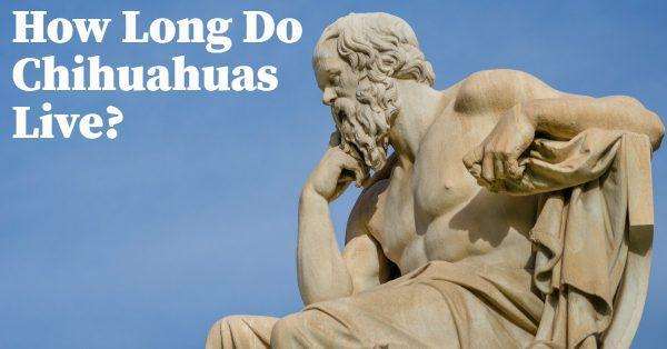 How Long do Chihuahuas Live? Who Cares!