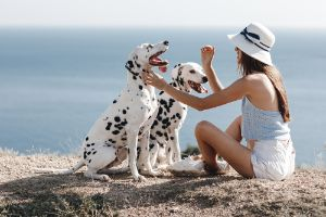 Dalmatians being trained by their owner.jpg