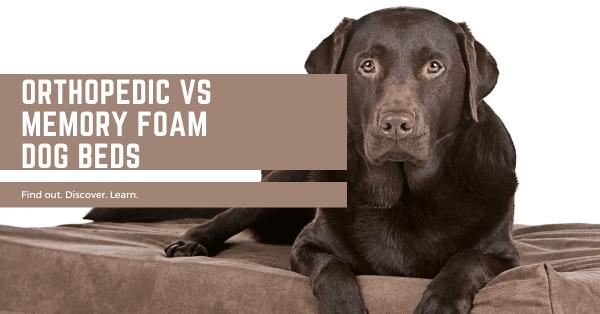 Orthopedic vs Memory Foam Dog Beds