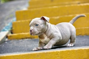 Puppy playing on the stair.jpg