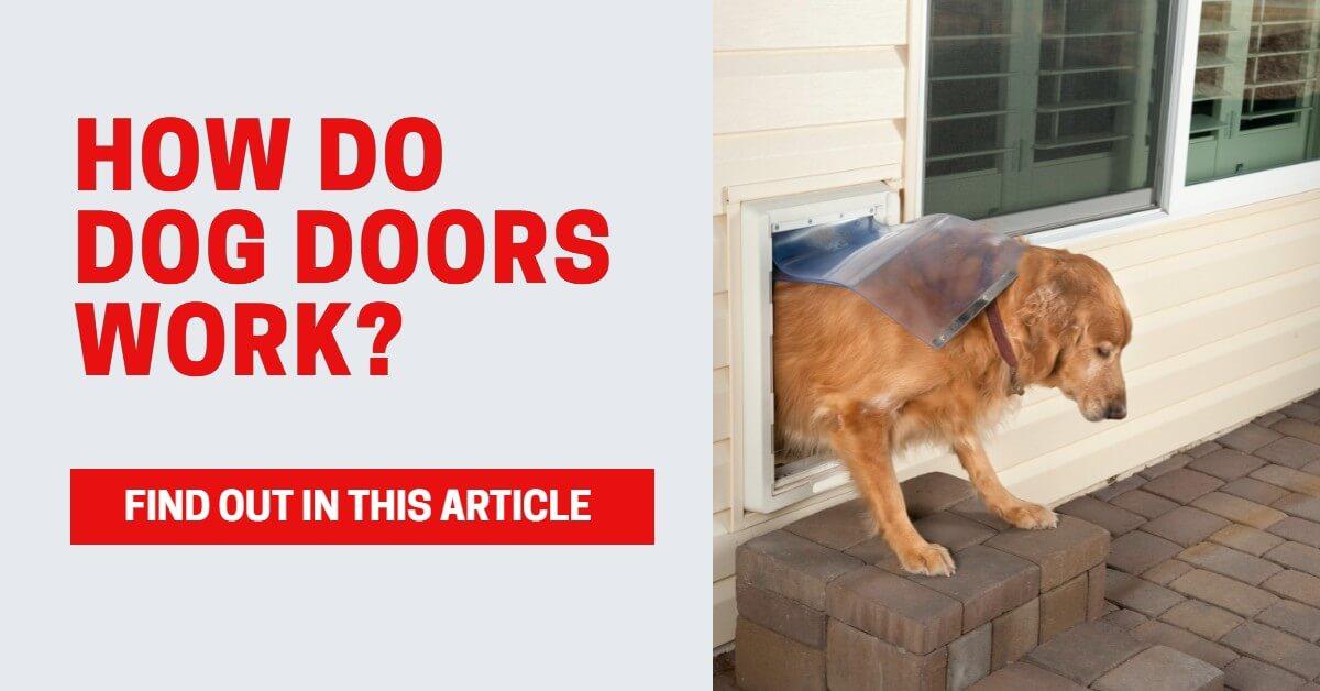 how do dog doors work