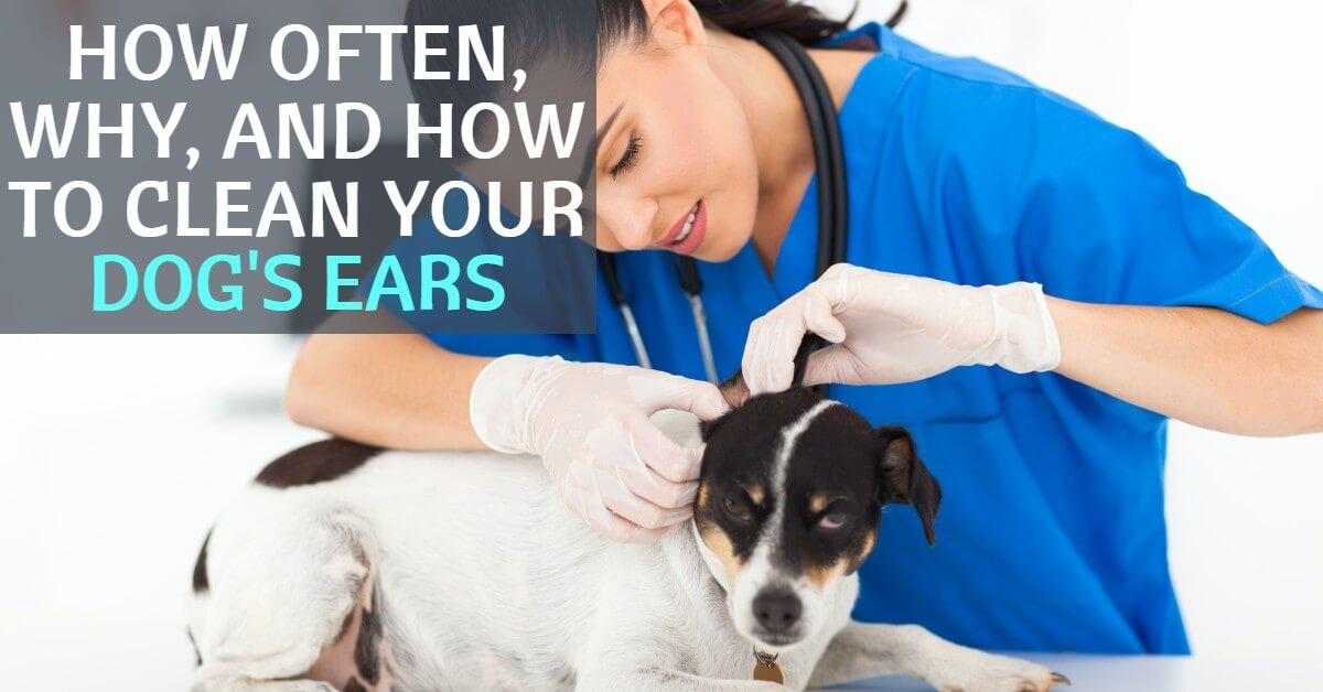 how often to clean your dogs ears