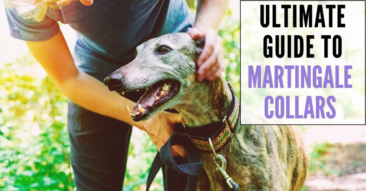 ultimate guide to martingale collars