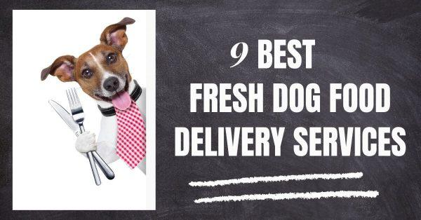 9 Best Fresh Dog Food Delivery Services