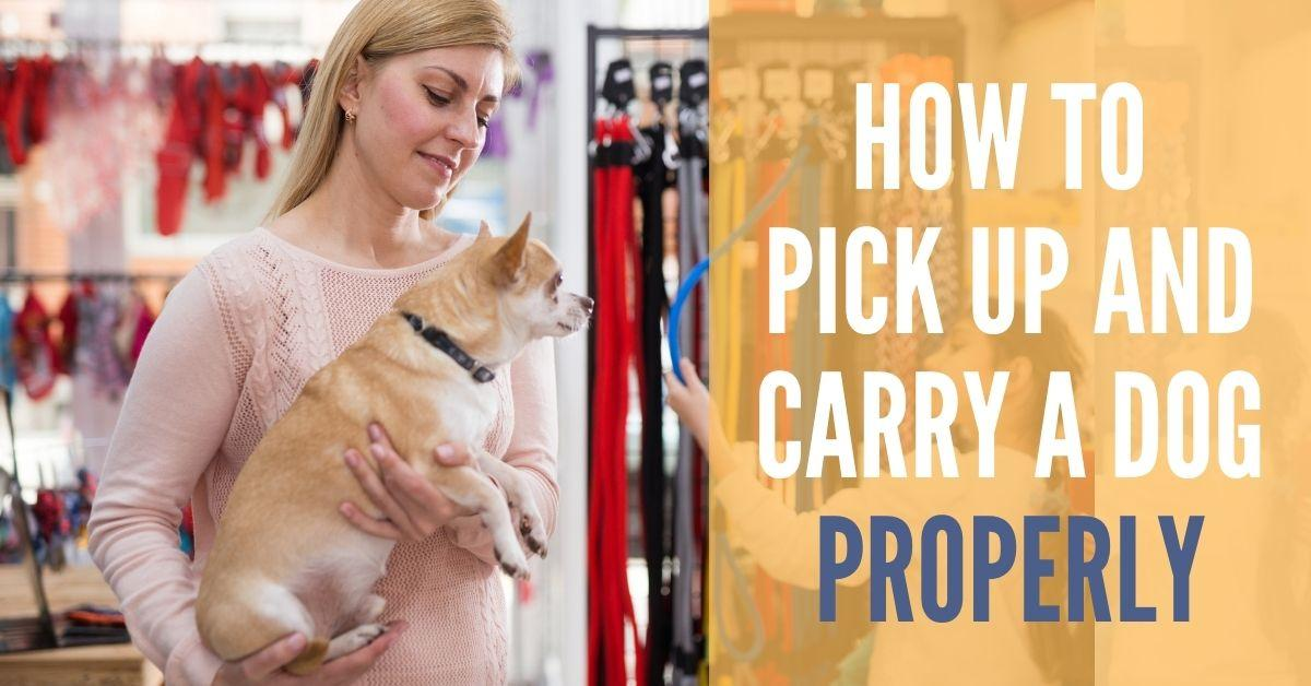 How to Pick Up and Carry Dog Properly