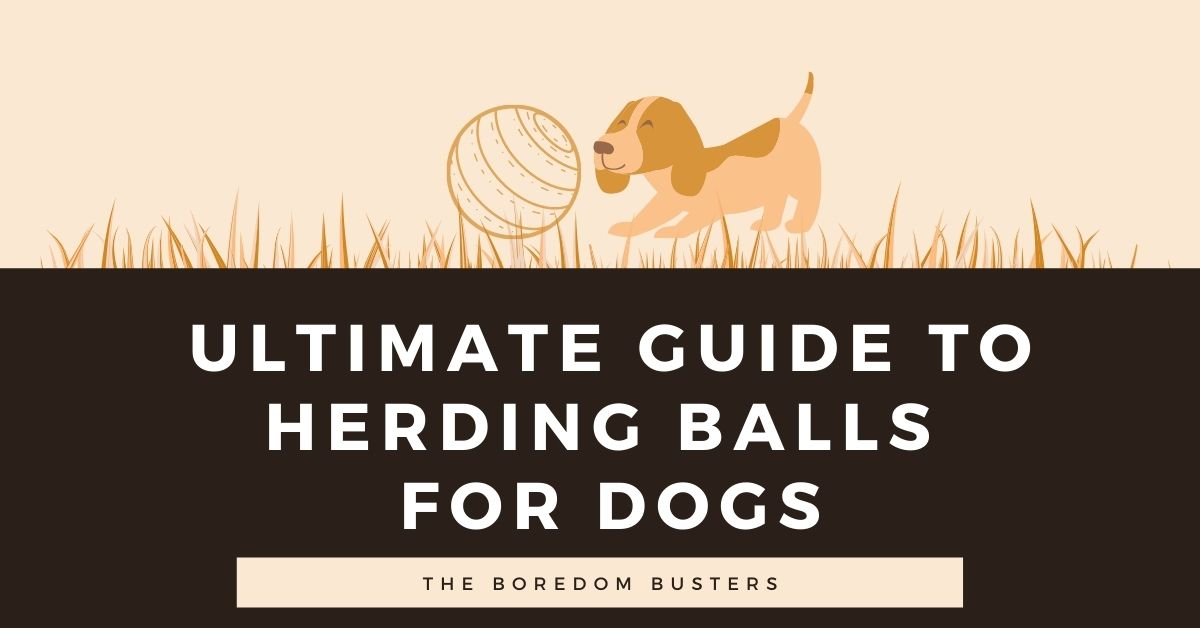 Ultimate Guide to Herding Balls for Dogs