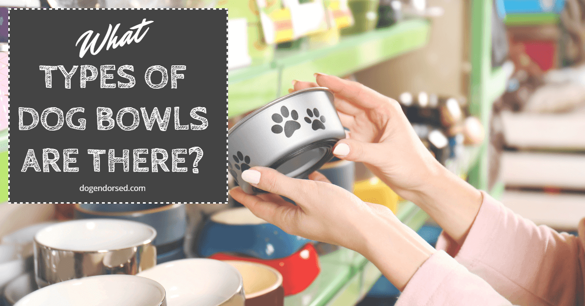 What Types of Dog Bowls Are There