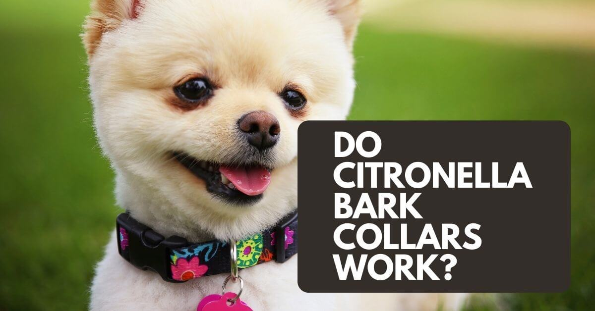 Do Citronella Bark Collars Work