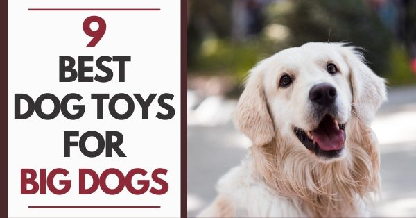 9 Best Dog Toys for Big Dogs: Chewable Yet Tough